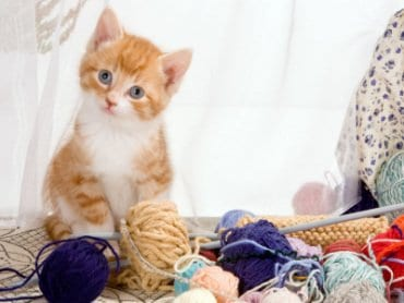 Cat Sitter Toronto | Cat with Yarn