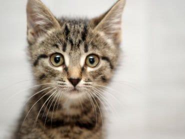 Cat Sitter Toronto | Cat